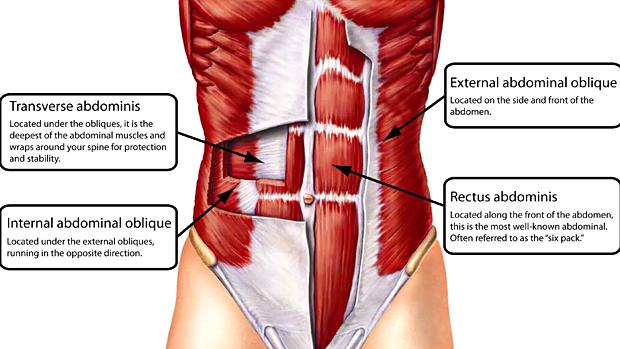 Ab Anatomy