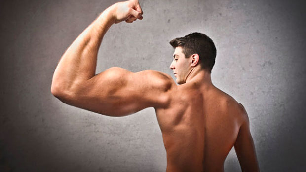 Biceps Isolation