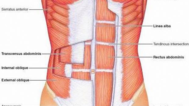 Core Anatomy