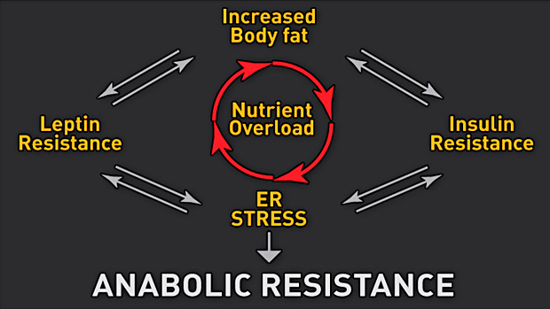 Diagram Anabolic Resistance