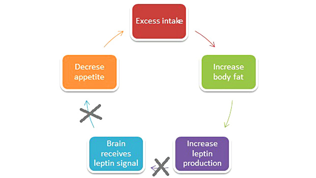 Diagram Leptin Resistance
