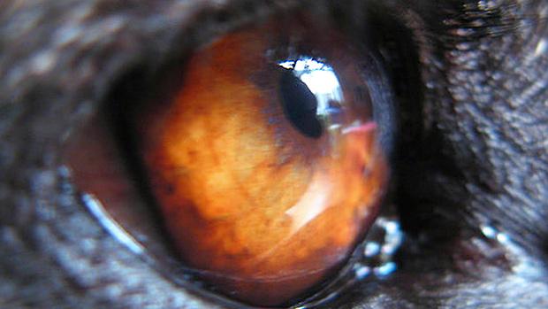 Eye of the Dog