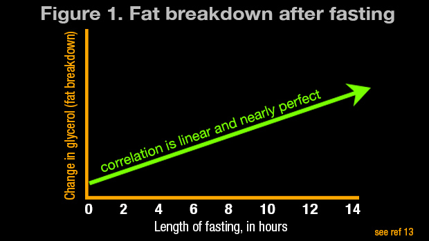 Fat-Breakdown-after-Fasting