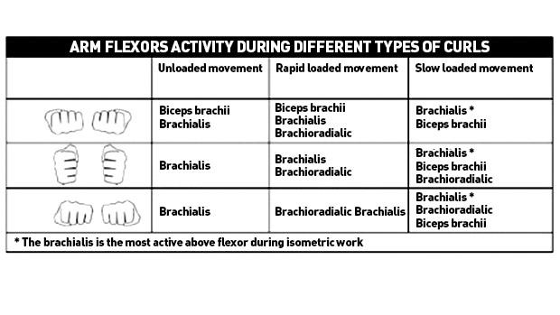 Flexors-Activity