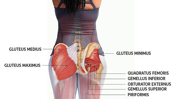 Glute Anatomy