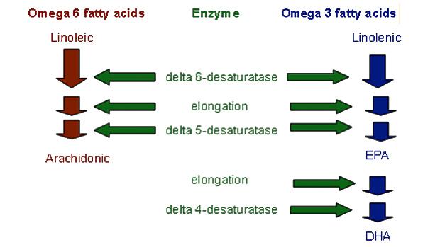 Omega-6 Fats to Omega-3