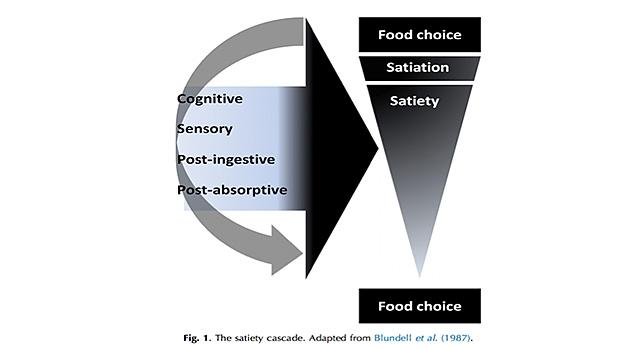 Satiation Chart