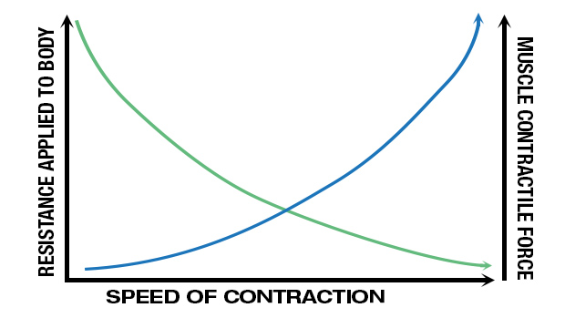 Speed of Contraction