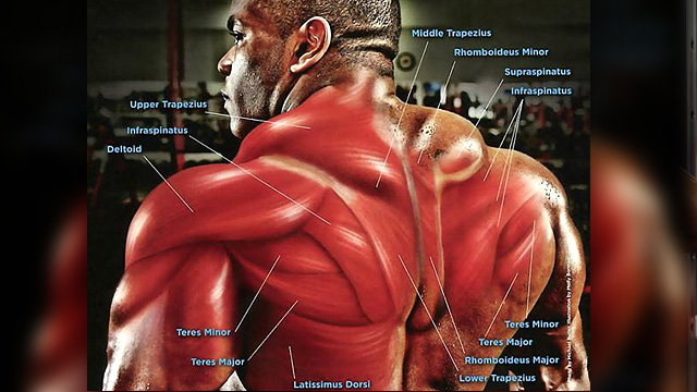 Trap/Back Diagram