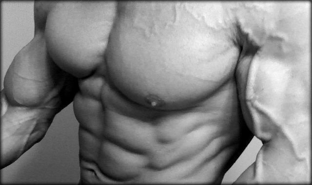 bodybuilder-torso