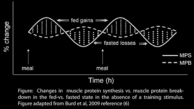 How do steroids increase protein synthesis steroid treatment and surgery
