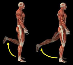 hamstring-muscle