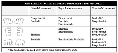 arm flexors