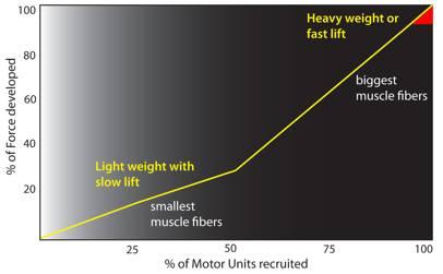 Size Principle Chart