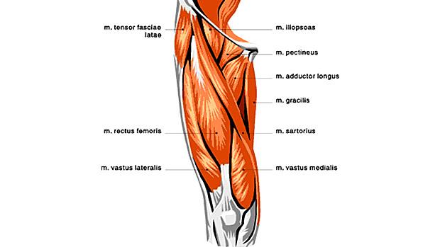 rectus-femoris