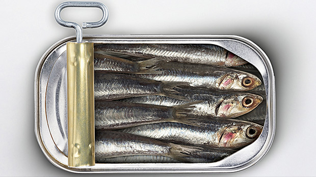 Cans-of-Sardines