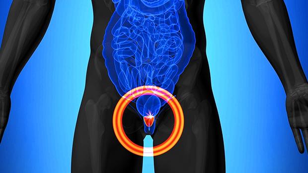 Prostate Health Bodybuilding